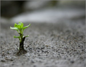 Ayudar a crecer el árbol del emprendedor - mprende.es