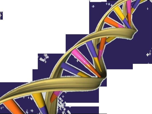 El modelo de negocio es el ADN del negocio - mprende.es